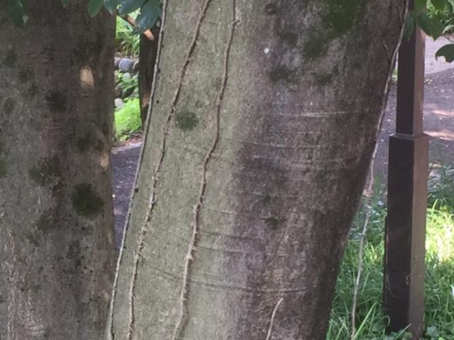樹種クイズ
