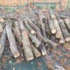 【薪ストーブの薪用原木入荷】ナラ原木が5トンほど入荷しました。