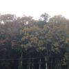 ナラの木も徐々に葉が色づいて、そして落葉