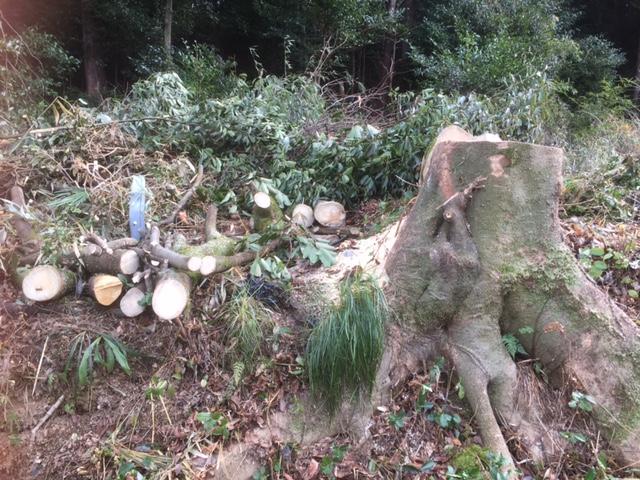 父の紹介で伐採後の雑木の現場を紹介していただきました。