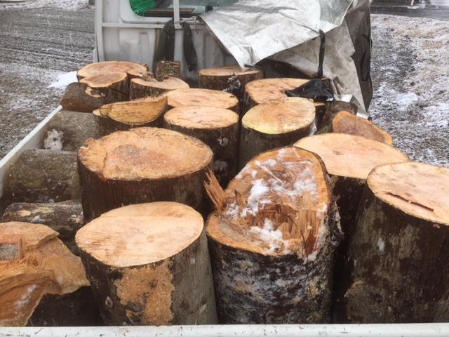 【原木回収】ご近所の薪ストーブユーザーさんと原木を回収してきました。