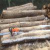 【山師から購入】原木を切って回収しました。