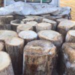 【薪づくり】平日朝から原木の回収。めっちゃ凍ってる><