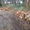 父の紹介で、若干傷んだ針葉樹原木を回収