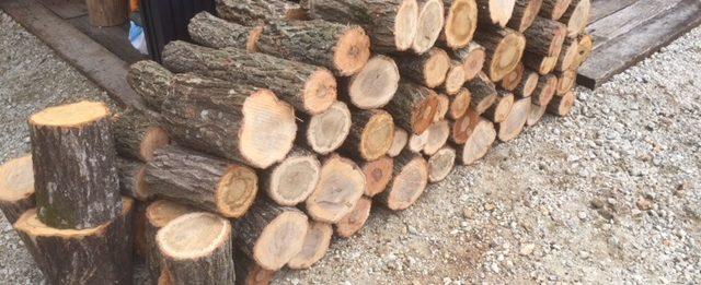 【原木さらに購入】山師の土場で購入した原木を切りました。