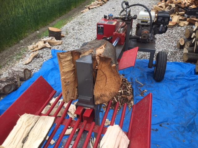 【薪割り】カシを割る。中にモミジとか見つかる。