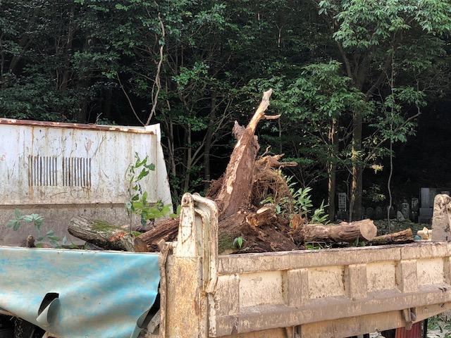 【一部傷んでるけど】ナラの木が土場に入荷