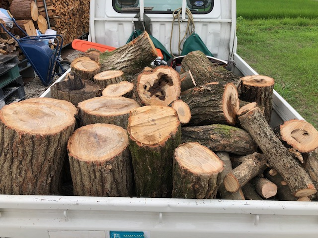 【まだ原木狩り】曇ったので平日でも朝から原木の回収っす!!