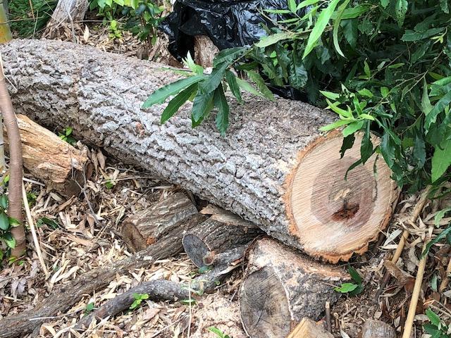【薪集めジャパン】崖にある転がりそうな原木の為にハンドウィンチを買ったが
