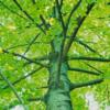 あれ、揖斐森林資源活用センターの薪用原木が1kg10円→12円へ値上げしてる?
