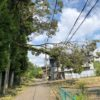 【沢山木が倒れてしまっている】台風の影響が続く。