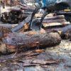 【特殊な依頼】プロダクト用に原木を2カ所から購入した。