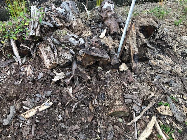 むかーし、多分2013年だと思うけど、伐採現場をみつけて師匠と回収にいったことがある。 そこは小さな山で、周りの木を綺麗に伐採していた。中にナラの木やカシの木があって、それをいただくことにした。
