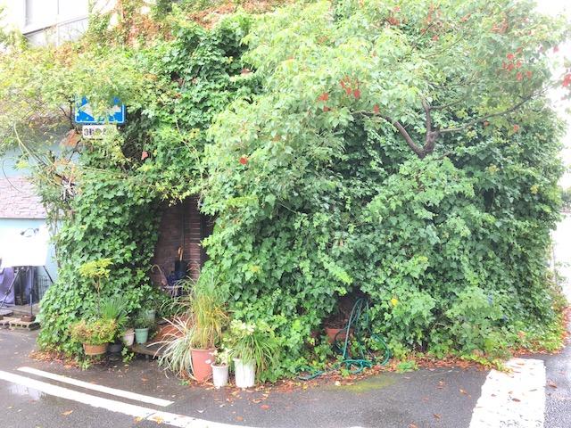 岐阜市の小さな美術館(プティ ミュゼ)カフェのシェドームに行く