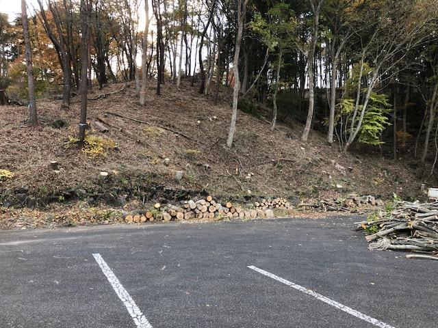 森作りワークショップ伐採 2日目