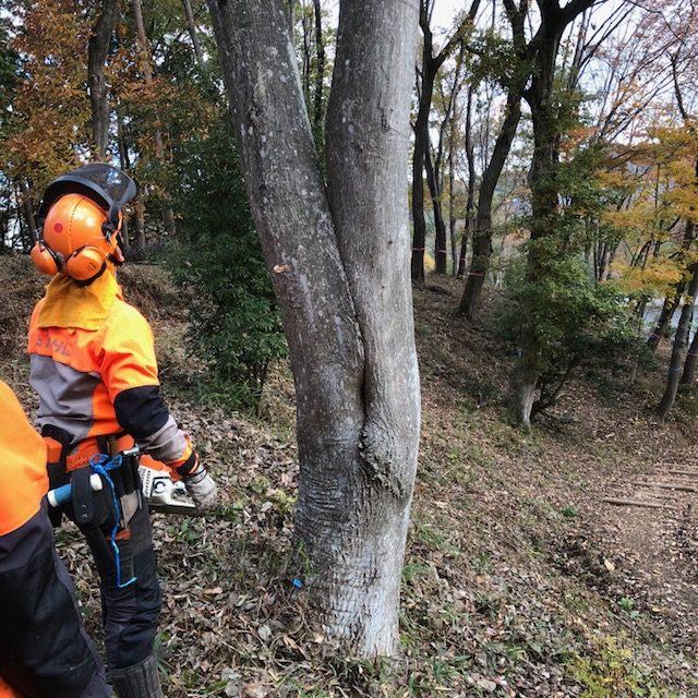 森作りワークショップ伐採 3日目