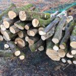 山師から原木入荷ラッシュ。処理が追いつかない。