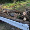またまた山師から原木購入。ひたすら玉切り。