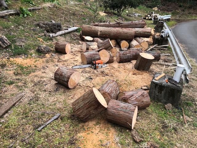 針葉樹原木を全部切ってしまう。