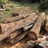 土場の原木を片付けて行く