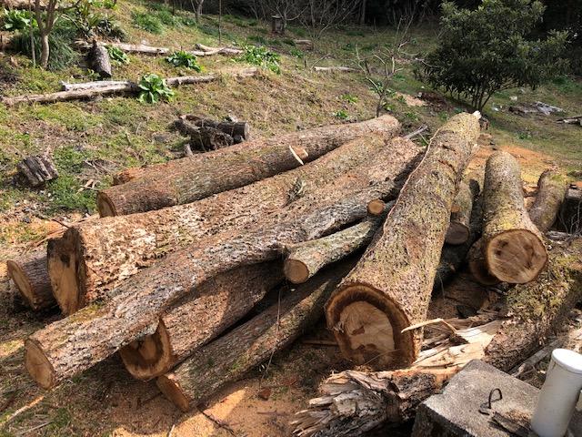 山師から買った原木を切り始める。