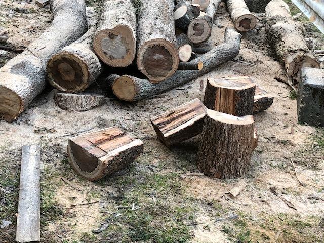 続・原木を切る