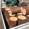 針葉樹の注文