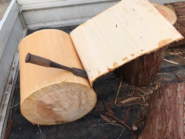 一部皮をめくって、木肌が出た所から、ぐいぐいとめくることができる!!