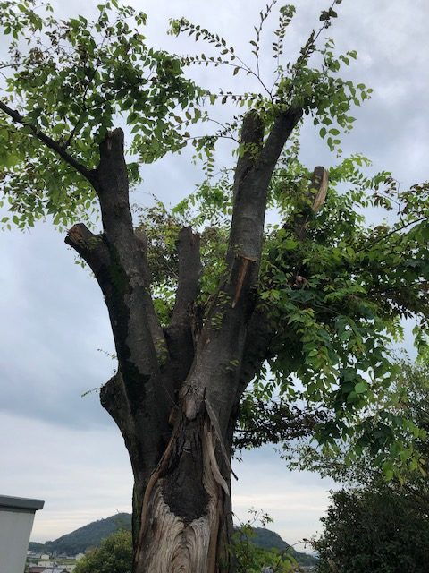 ファイヤーライフ岐阜からの原木現場の紹介