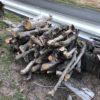 岐阜の名産「富有柿」の柿の木の回収