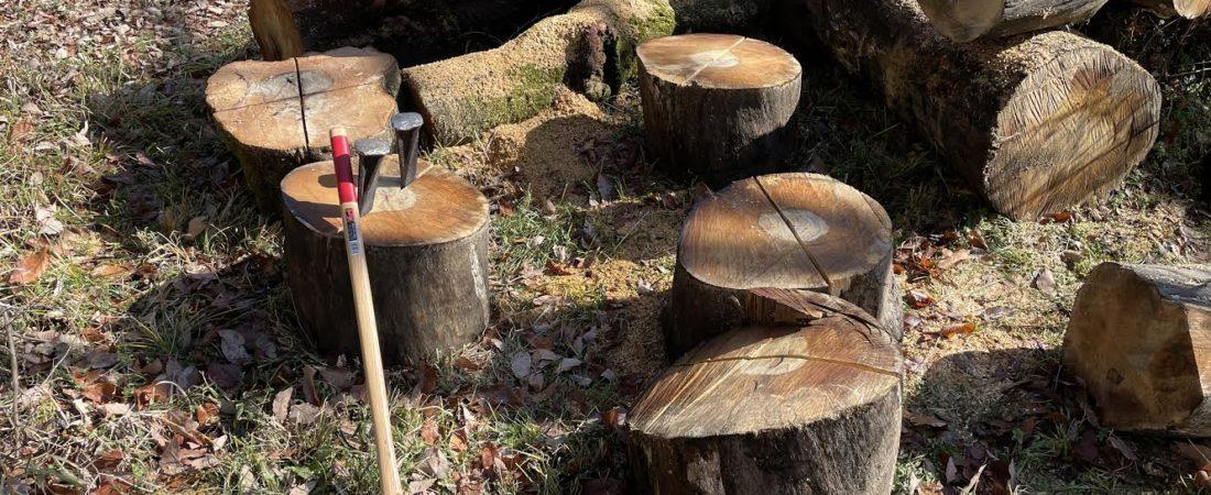 【太い】カシの原木を切りに行きました。