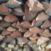 (薪積み初級編)薪を積む時は皮を下に。断面を上に。